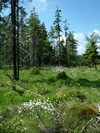 The Bo��darsk� ra�elini�t� peatbogs - a complex of slope and watershed peatbogs