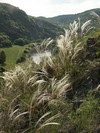 �esk� kras is a typical locality for the feather-grass Stipa pennata, which was named (in Czech) after the hermit St. Ivan
